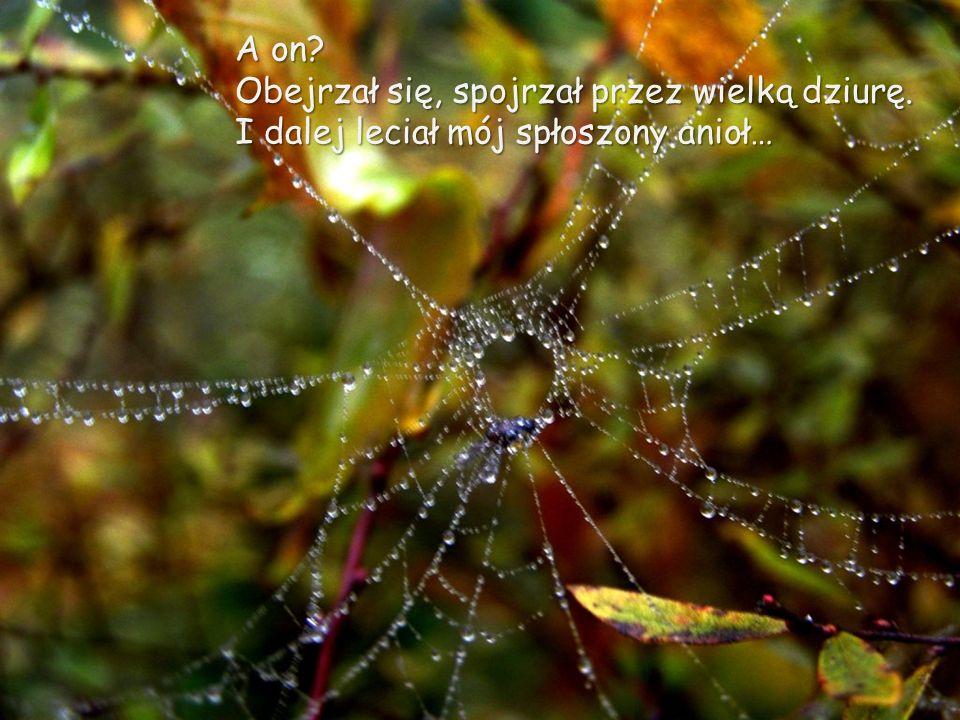 Nawet pająk zdziwiony – spoczął na anielskim dywanie