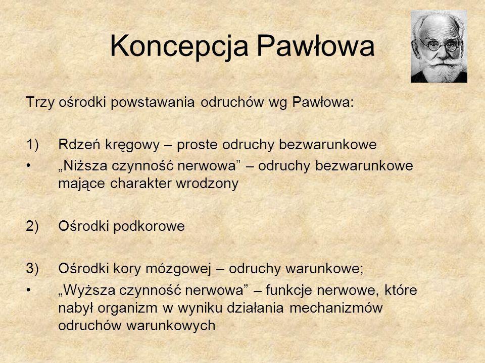 Koncepcja Pawłowa Trzy ośrodki powstawania odruchów wg Pawłowa: 1)Rdzeń kręgowy – proste odruchy bezwarunkowe Niższa czynność nerwowa – odruchy bezwar