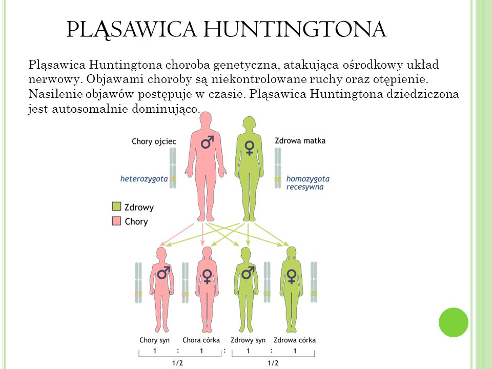 PL Ą SAWICA HUNTINGTONA Pląsawica Huntingtona choroba genetyczna, atakująca ośrodkowy układ nerwowy.