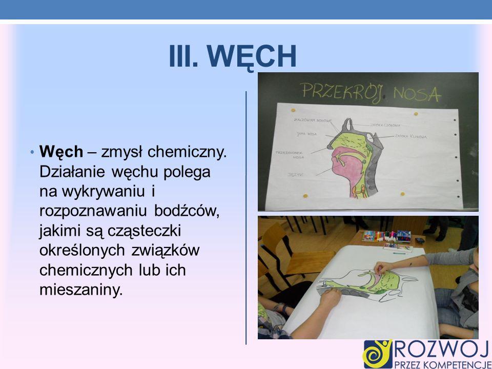 III. WĘCH Węch – zmysł chemiczny. Działanie węchu polega na wykrywaniu i rozpoznawaniu bodźców, jakimi są cząsteczki określonych związków chemicznych