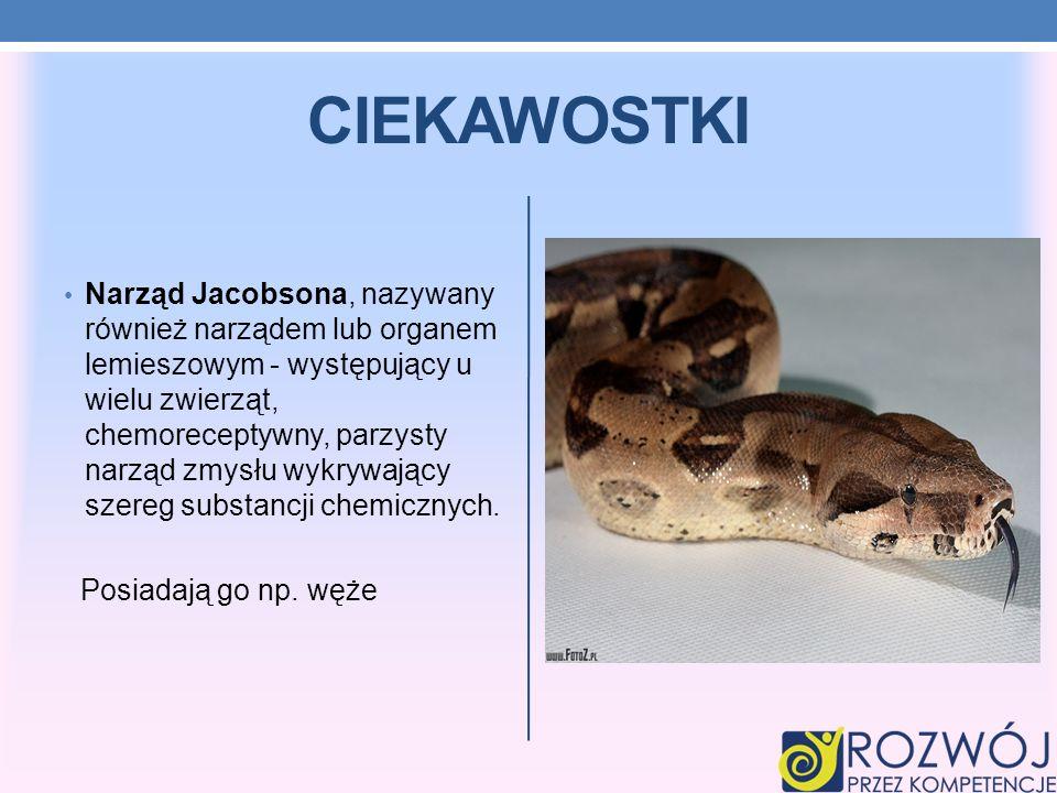 CIEKAWOSTKI Narząd Jacobsona, nazywany również narządem lub organem lemieszowym - występujący u wielu zwierząt, chemoreceptywny, parzysty narząd zmysł