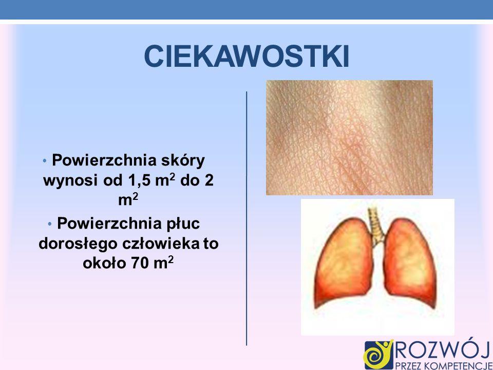 CIEKAWOSTKI Powierzchnia skóry wynosi od 1,5 m 2 do 2 m 2 Powierzchnia płuc dorosłego człowieka to około 70 m 2