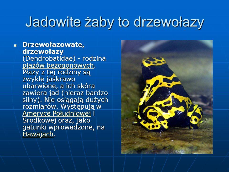 Jadowite żaby to drzewołazy Drzewołazowate, drzewołazy (Dendrobatidae) - rodzina płazów bezogonowych.
