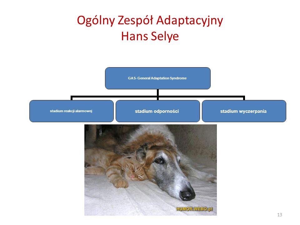 13 Ogólny Zespół Adaptacyjny Hans Selye GAS- General Adaptation Syndrome stadium reakcji alarmowej stadium odporności stadium wyczerpania