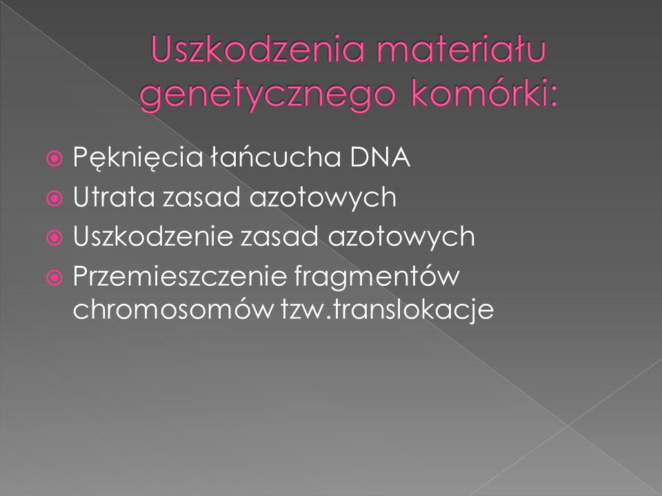 Pęknięcia łańcucha DNA Utrata zasad azotowych Uszkodzenie zasad azotowych Przemieszczenie fragmentów chromosomów tzw.translokacje