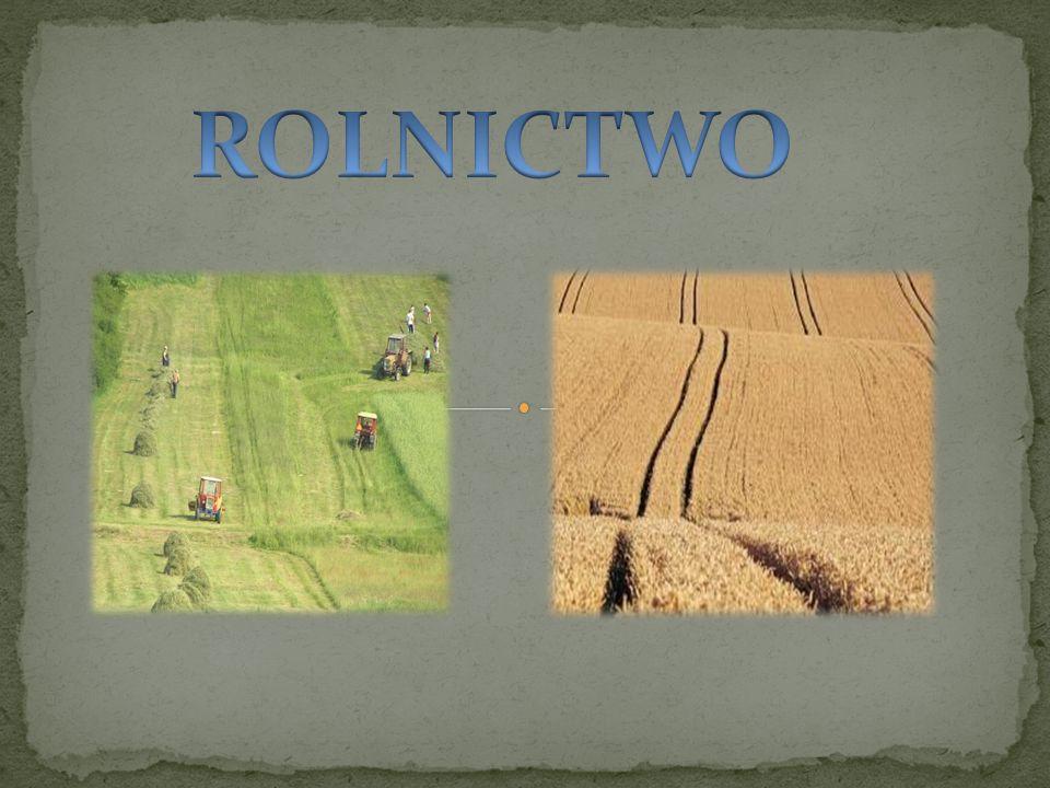 Rolnictwo – jeden z działów gospodarki, którego głównym zadaniem jest dostarczenie płodów rolnych.