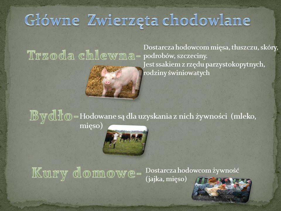 Dostarcza hodowcom mięsa, tłuszczu, skóry, podrobów, szczeciny. Jest ssakiem z rzędu parzystokopytnych, rodziny świniowatych Hodowane są dla uzyskania