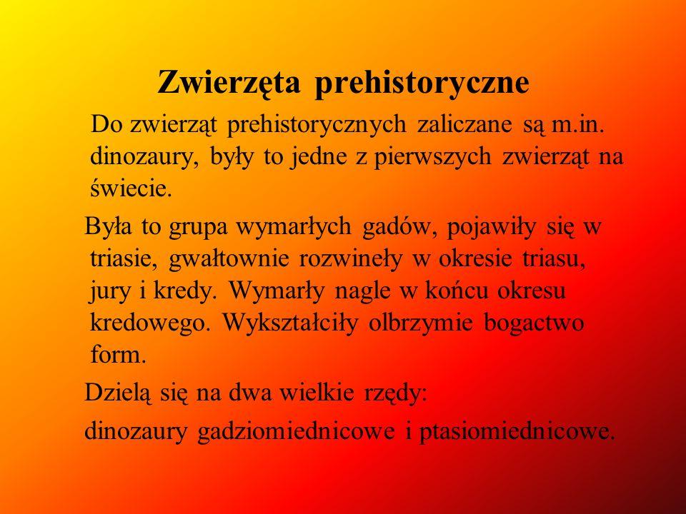 Zwierzęta prehistoryczne Do zwierząt prehistorycznych zaliczane są m.in. dinozaury, były to jedne z pierwszych zwierząt na świecie. Była to grupa wyma
