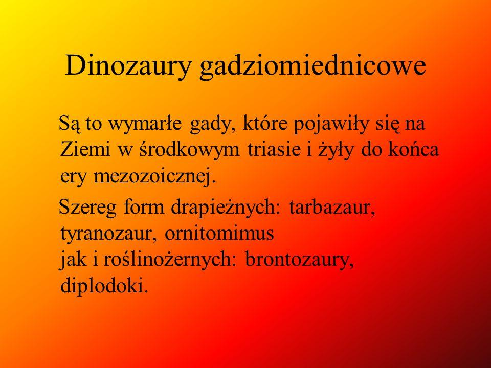 Dinozaury gadziomiednicowe Są to wymarłe gady, które pojawiły się na Ziemi w środkowym triasie i żyły do końca ery mezozoicznej. Szereg form drapieżny