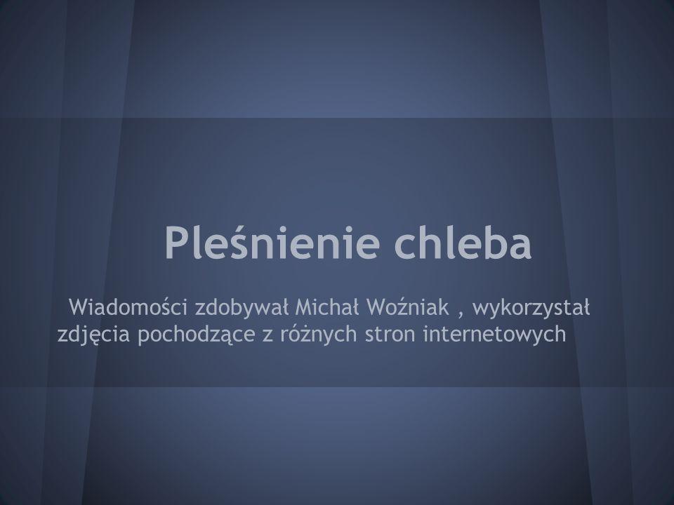 Pleśnienie chleba Wiadomości zdobywał Michał Woźniak, wykorzystał zdjęcia pochodzące z różnych stron internetowych
