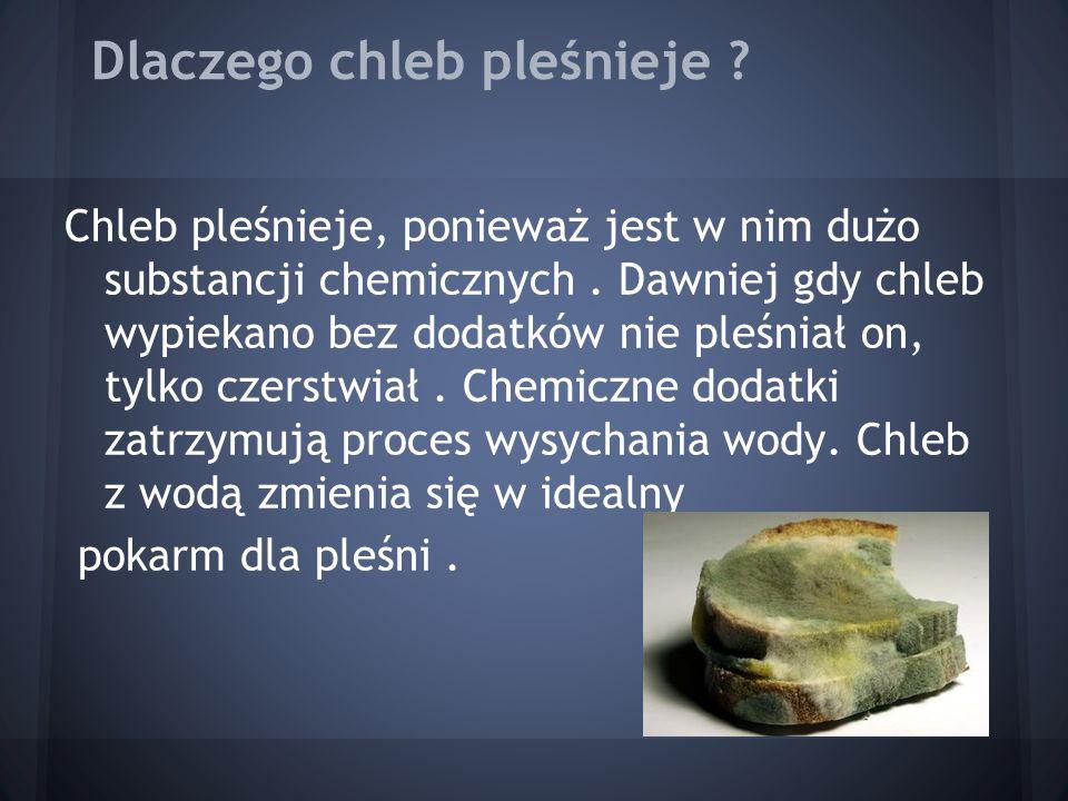 Dlaczego chleb pleśnieje ? Chleb pleśnieje, ponieważ jest w nim dużo substancji chemicznych. Dawniej gdy chleb wypiekano bez dodatków nie pleśniał on,