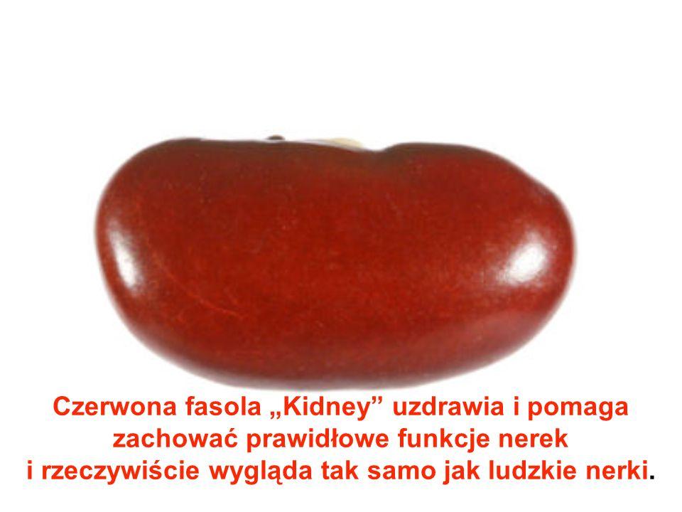 Czerwona fasola Kidney uzdrawia i pomaga zachować prawidłowe funkcje nerek i rzeczywiście wygląda tak samo jak ludzkie nerki.