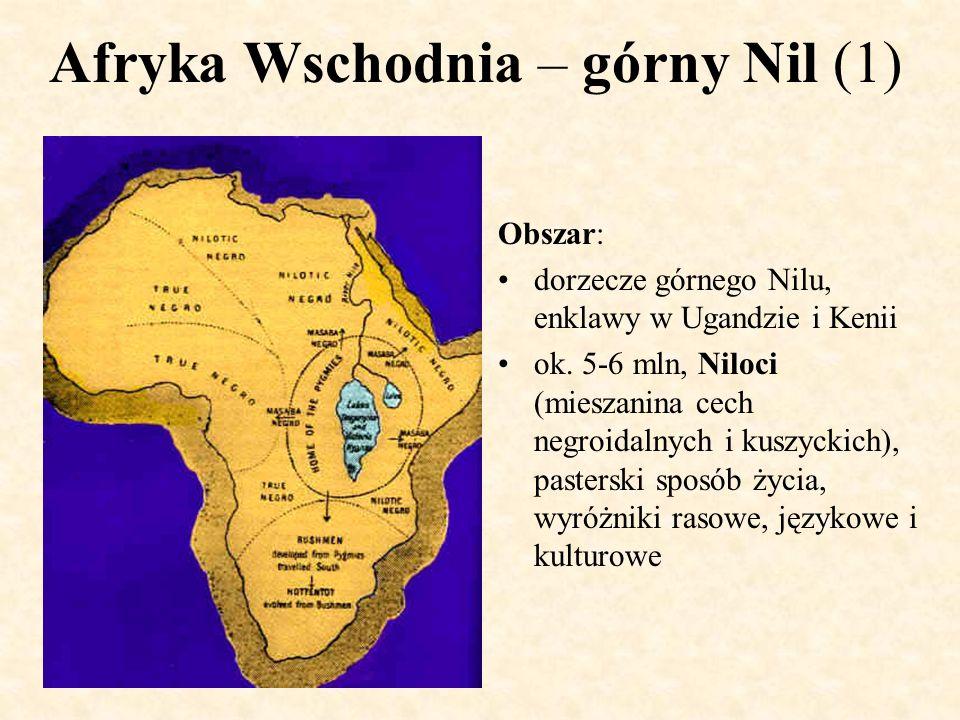 Afryka Wschodnia – górny Nil (1) Obszar: dorzecze górnego Nilu, enklawy w Ugandzie i Kenii ok. 5-6 mln, Niloci (mieszanina cech negroidalnych i kuszyc