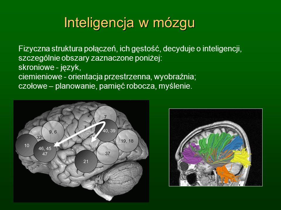 Inteligencja w mózgu Fizyczna struktura połączeń, ich gęstość, decyduje o inteligencji, szczególnie obszary zaznaczone poniżej: skroniowe - język, cie