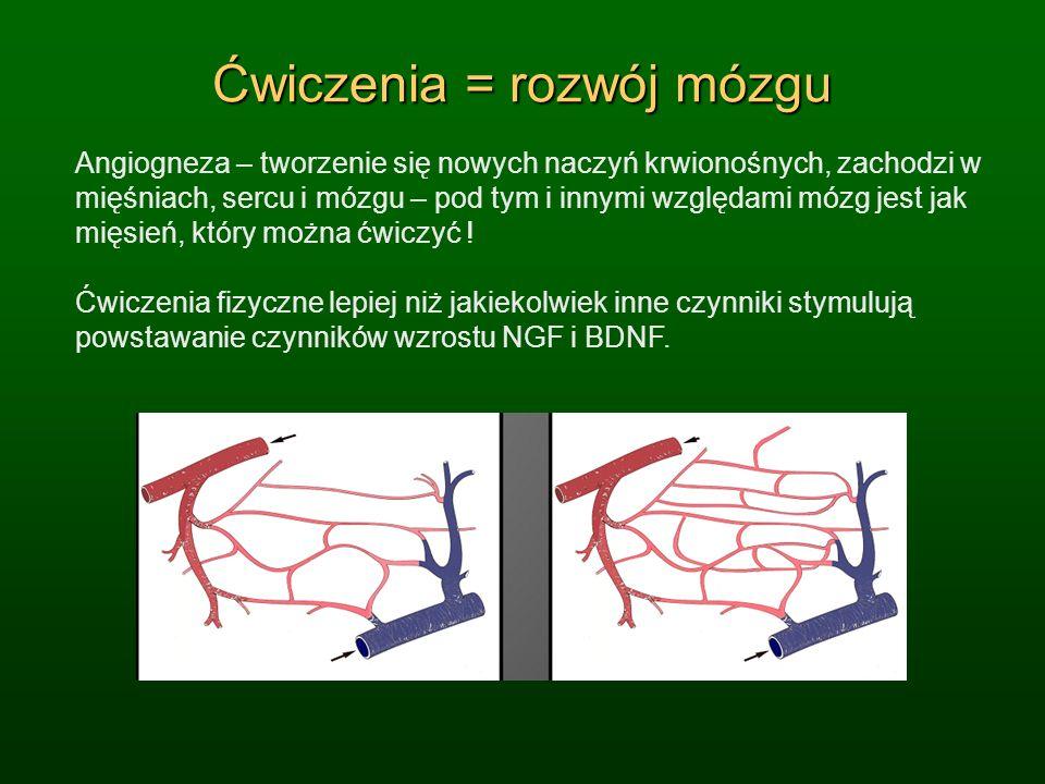 Ćwiczenia = rozwój mózgu Angiogneza – tworzenie się nowych naczyń krwionośnych, zachodzi w mięśniach, sercu i mózgu – pod tym i innymi względami mózg
