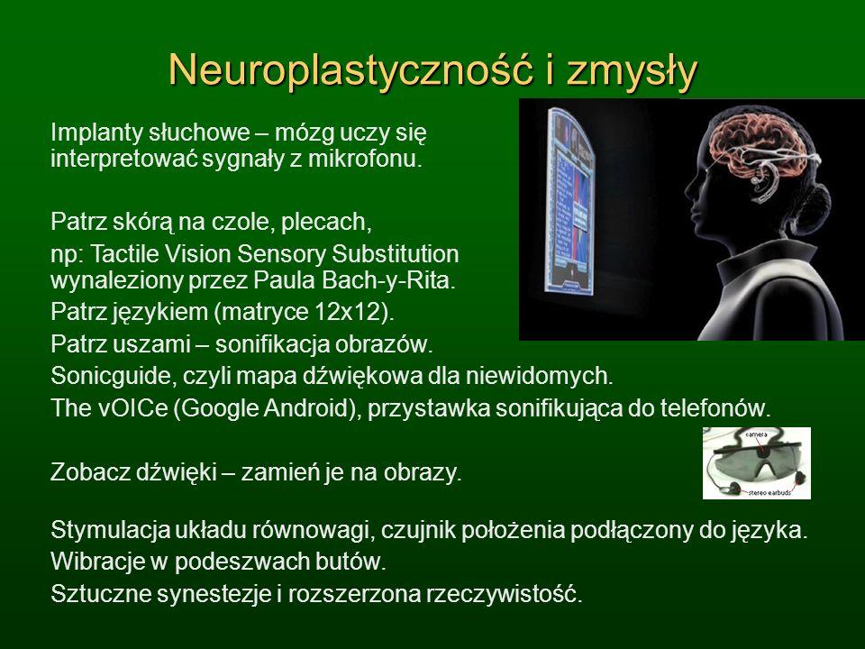 Neuroplastyczność i zmysły Implanty słuchowe – mózg uczy się interpretować sygnały z mikrofonu. Patrz skórą na czole, plecach, np: Tactile Vision Sens
