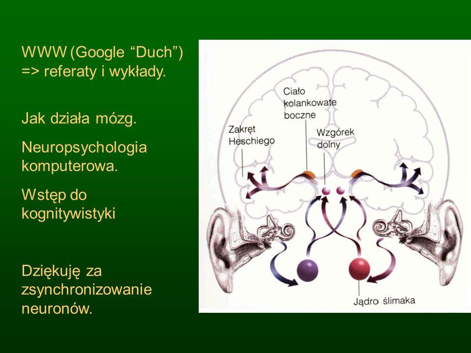 WWW (Google Duch) => referaty i wykłady. Jak działa mózg. Neuropsychologia komputerowa. Wstęp do kognitywistyki Dziękuję za zsynchronizowanie neuronów