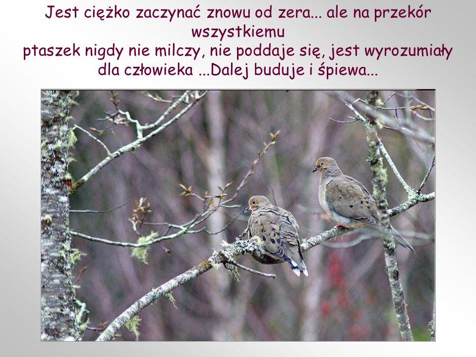 Niekiedy –a nawet bardzo często – wcześniej, niż wyklują się ptaszki, jakieś zwierzę, dziecko, burza, znowu zniszczy gniazdo, tym razem z całą zawarto