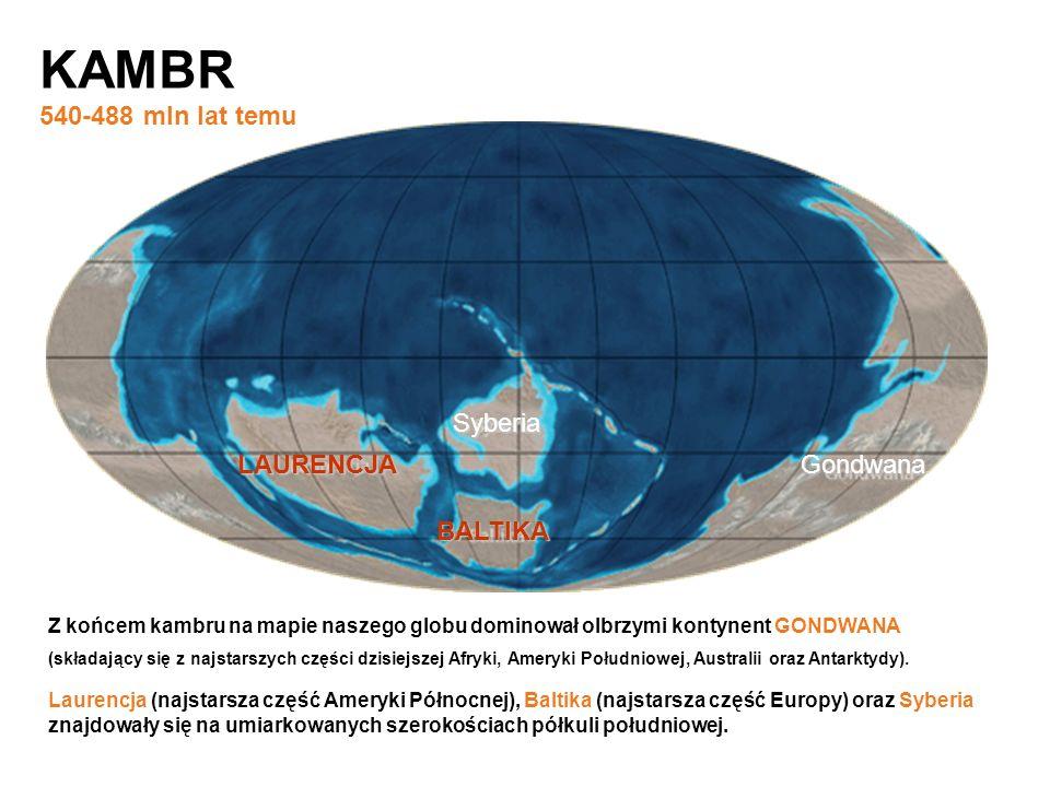 KAMBR 540-488 mln lat temu LAURENCJA Syberia BALTIKA Gondwana Z końcem kambru na mapie naszego globu dominował olbrzymi kontynent GONDWANA Laurencja (