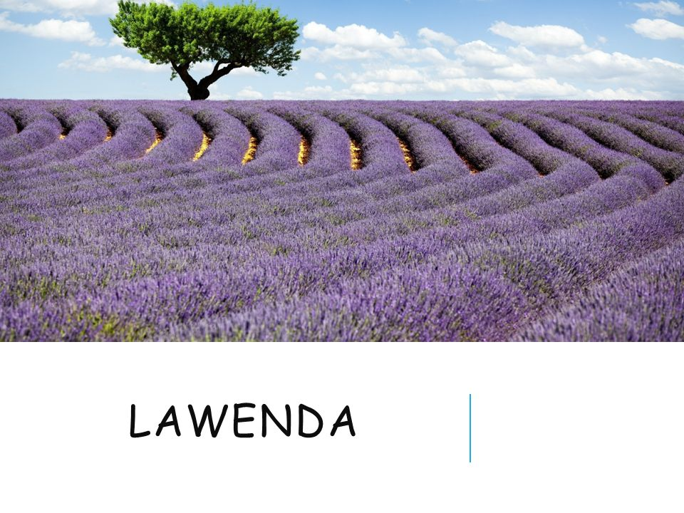 LAWENDA