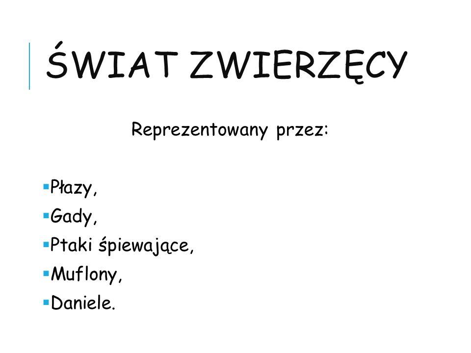 ŚWIAT ZWIERZĘCY Reprezentowany przez: Płazy, Gady, Ptaki śpiewające, Muflony, Daniele.