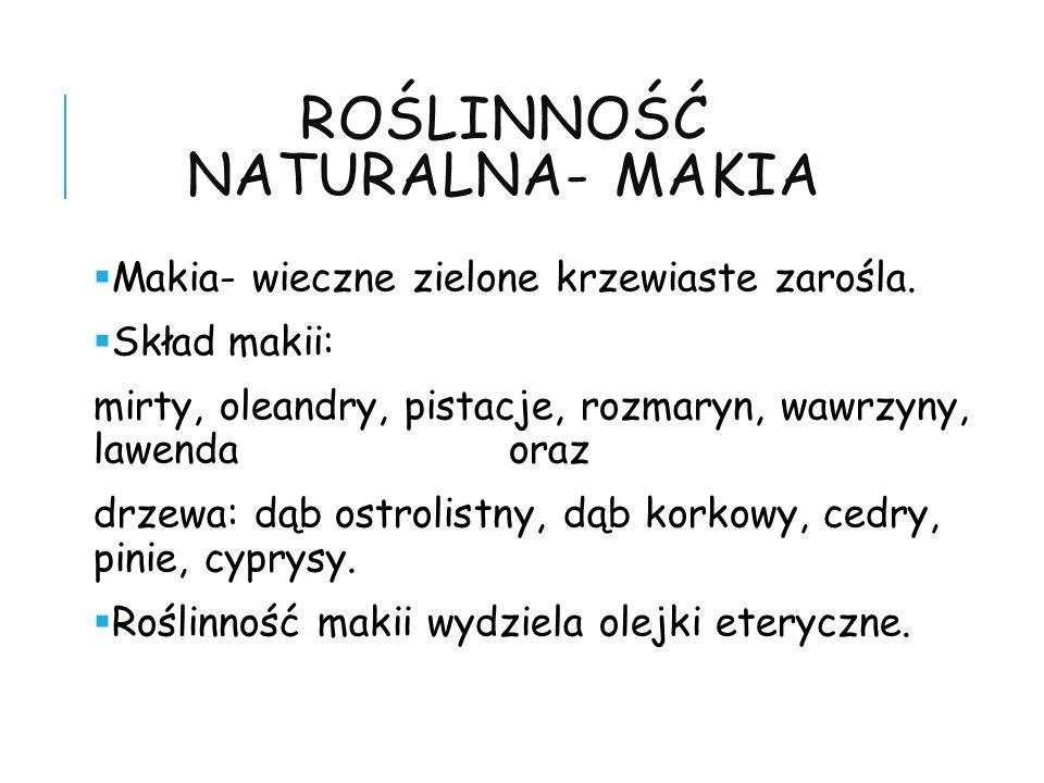 ROŚLINNOŚĆ NATURALNA- MAKIA Makia- wieczne zielone krzewiaste zarośla. Skład makii: mirty, oleandry, pistacje, rozmaryn, wawrzyny, lawenda oraz drzewa