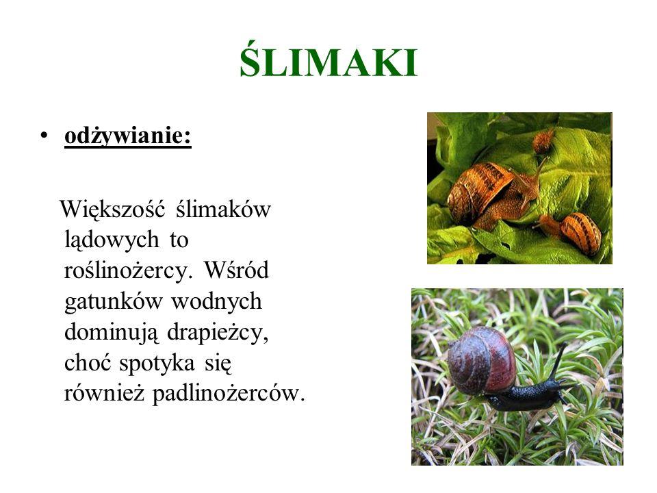 ŚLIMAKI odżywianie: Większość ślimaków lądowych to roślinożercy.