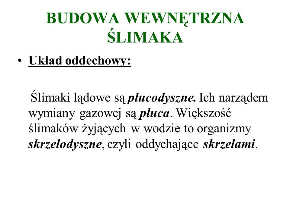 BUDOWA WEWNĘTRZNA ŚLIMAKA Układ oddechowy: Ślimaki lądowe są płucodyszne.