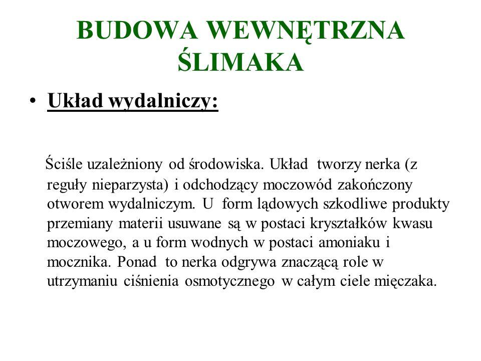 BUDOWA WEWNĘTRZNA ŚLIMAKA Układ wydalniczy: Ściśle uzależniony od środowiska.