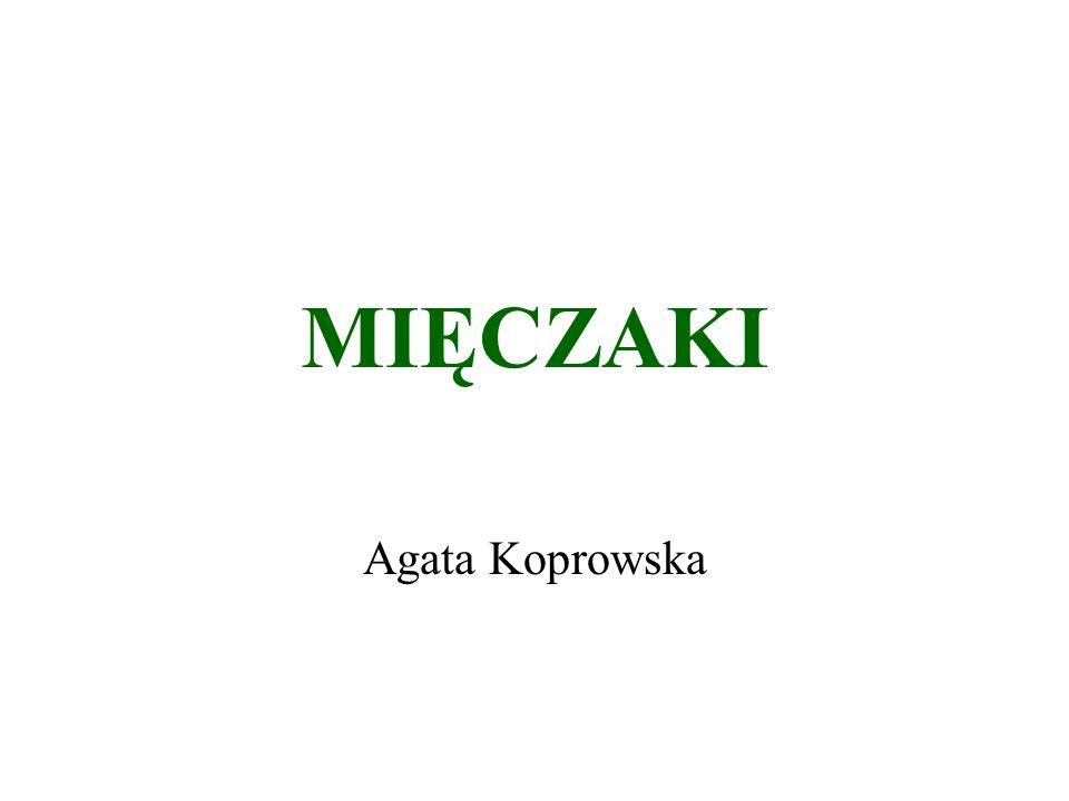 MIĘCZAKI Agata Koprowska