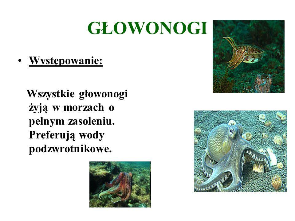 GŁOWONOGI Występowanie: Wszystkie głowonogi żyją w morzach o pełnym zasoleniu.