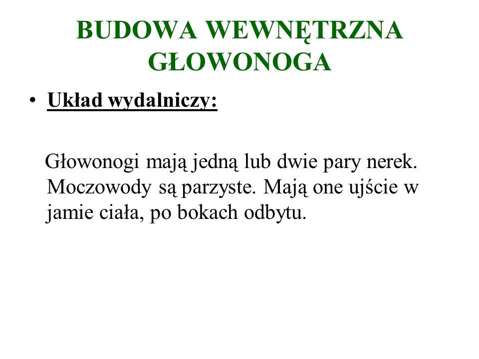 BUDOWA WEWNĘTRZNA GŁOWONOGA Układ wydalniczy: Głowonogi mają jedną lub dwie pary nerek.