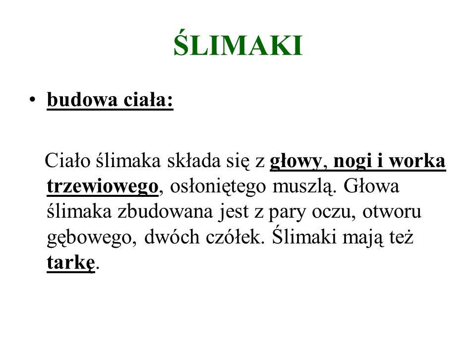 Bibliografia i netografia: Podręcznik do biologii do gimnazjum,, Plus życia 1,, M.Jefimow, M.Sęktas, wyd.