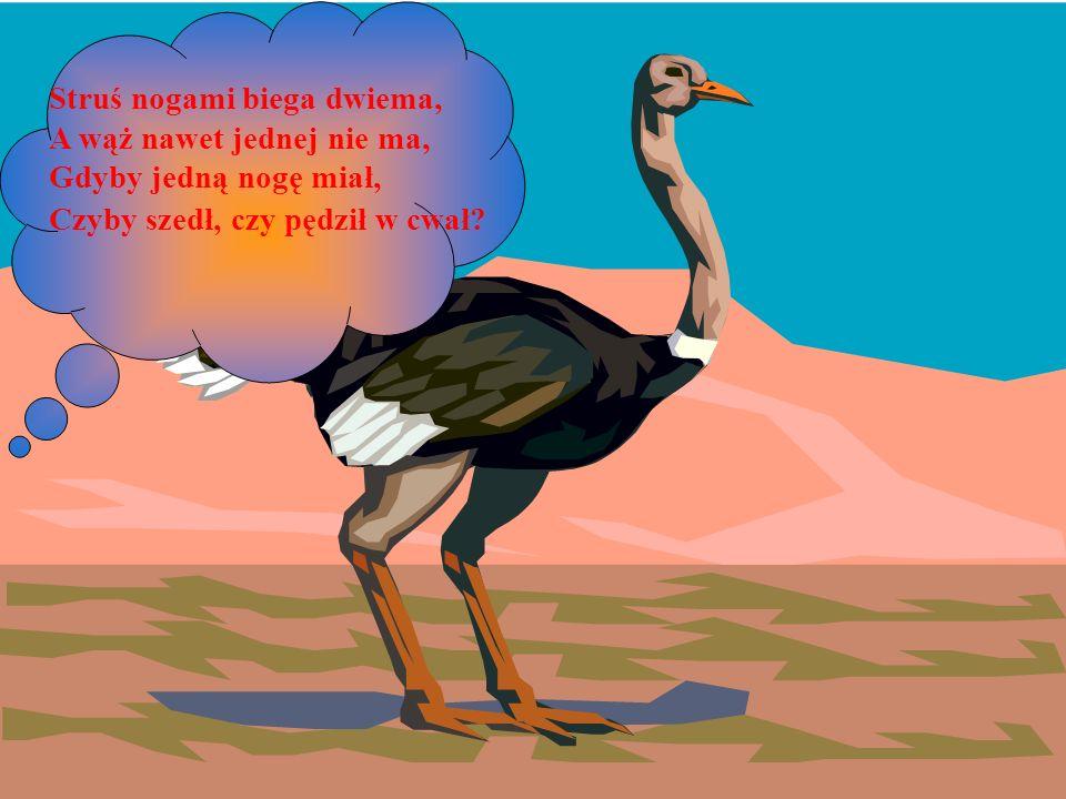 Struś nogami biega dwiema, A wąż nawet jednej nie ma, Gdyby jedną nogę miał, Czyby szedł, czy pędził w cwał?