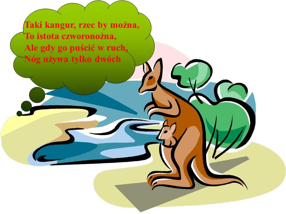 . Taki kangur, rzec by można, To istota czworonożna, Ale gdy go puścić w ruch, Nóg używa tylko dwóch