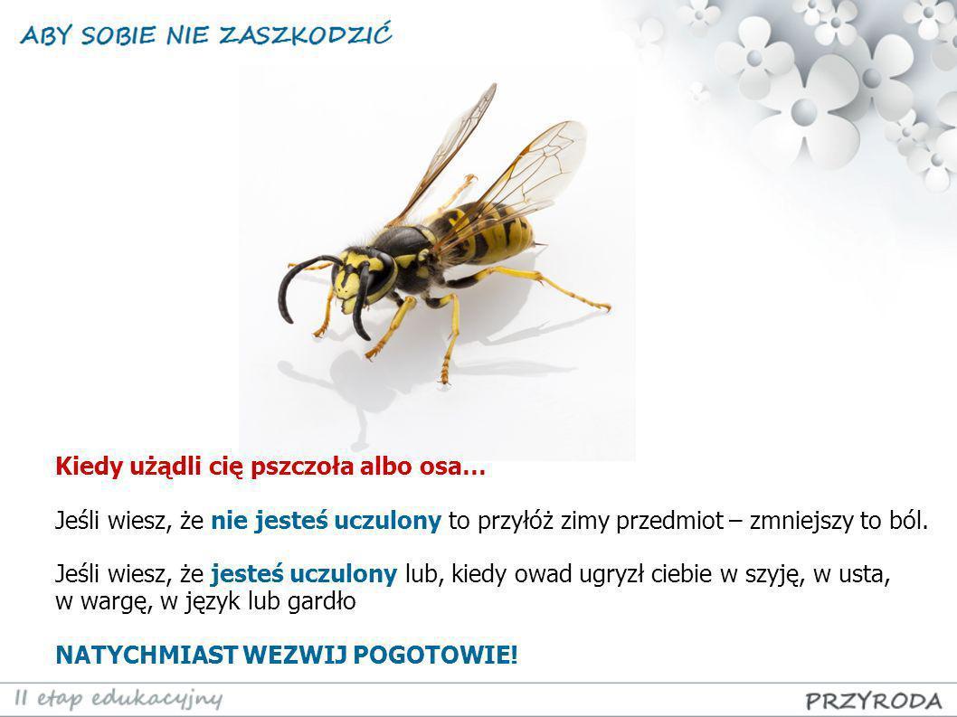 Kiedy użądli cię pszczoła albo osa… Jeśli wiesz, że nie jesteś uczulony to przyłóż zimy przedmiot – zmniejszy to ból. Jeśli wiesz, że jesteś uczulony