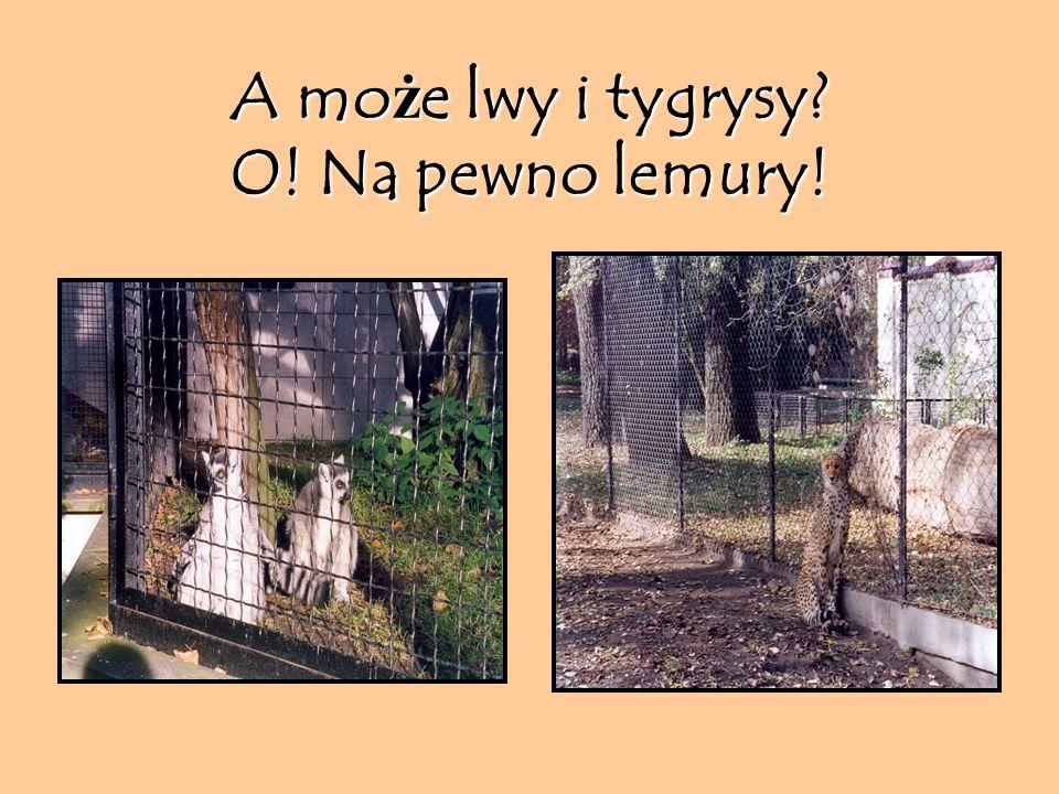 Czy w Warszawie są hipopotamy?