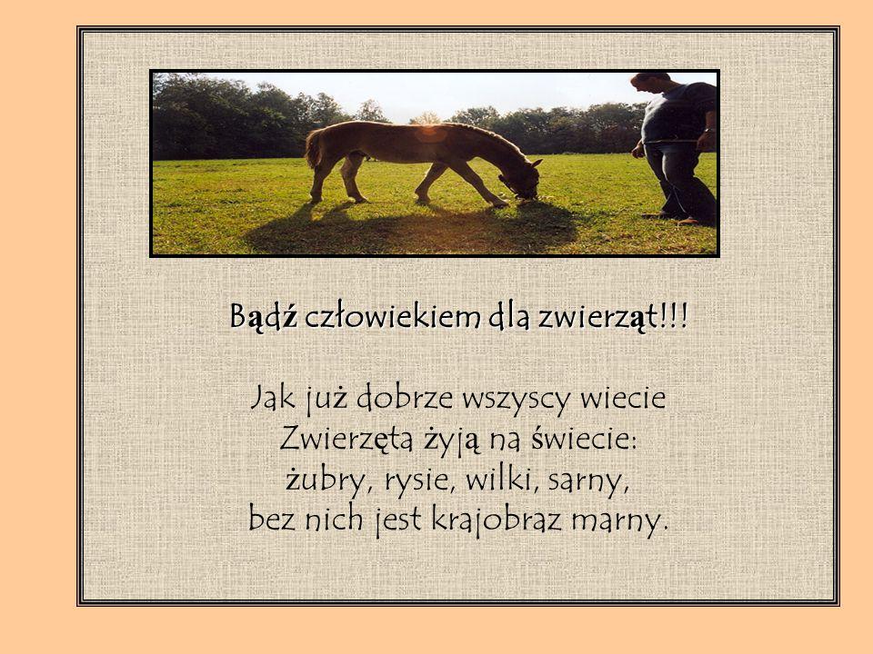 Zwierz ę tami z ZOO si ę nie zajmowali ś my, bo ogród zoologiczny w Warszawie jest tylko jeden i w innej dzielnicy.
