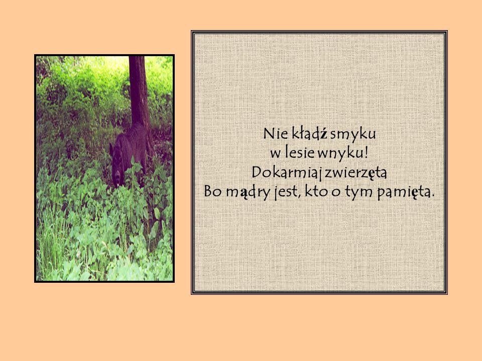 Dziki w lesie maj ą pecha – Niech nie braknie im orzecha.