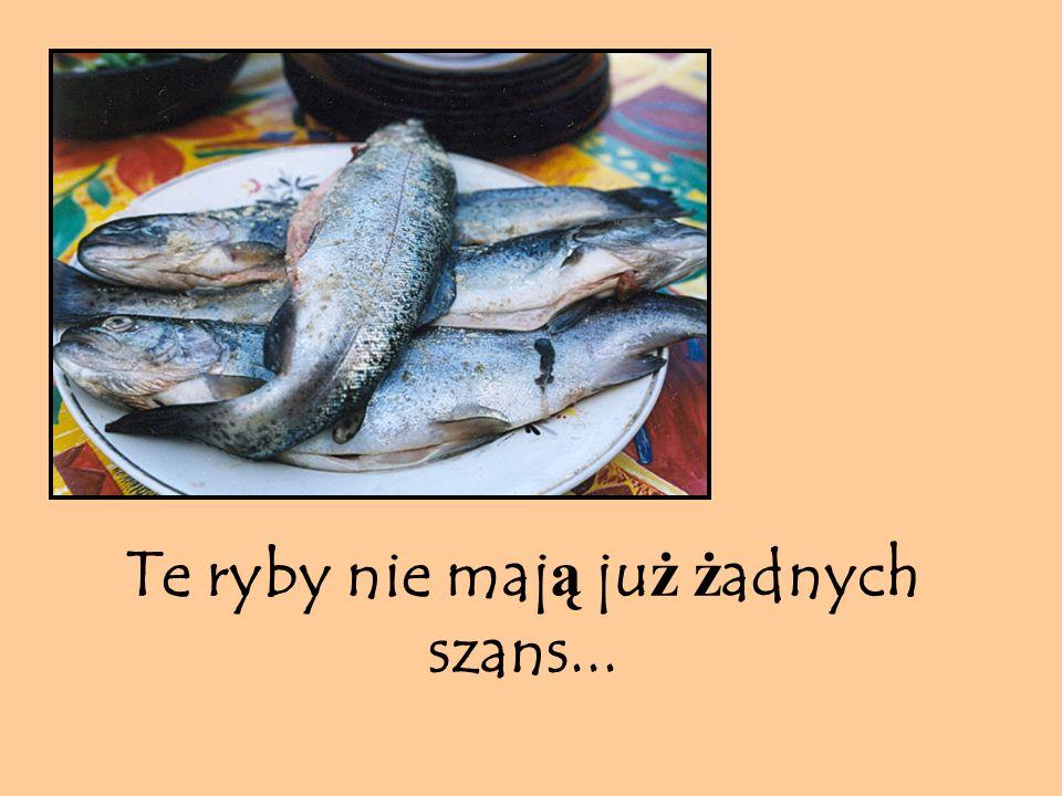 Te ryby nie maj ą ju ż ż adnych szans...