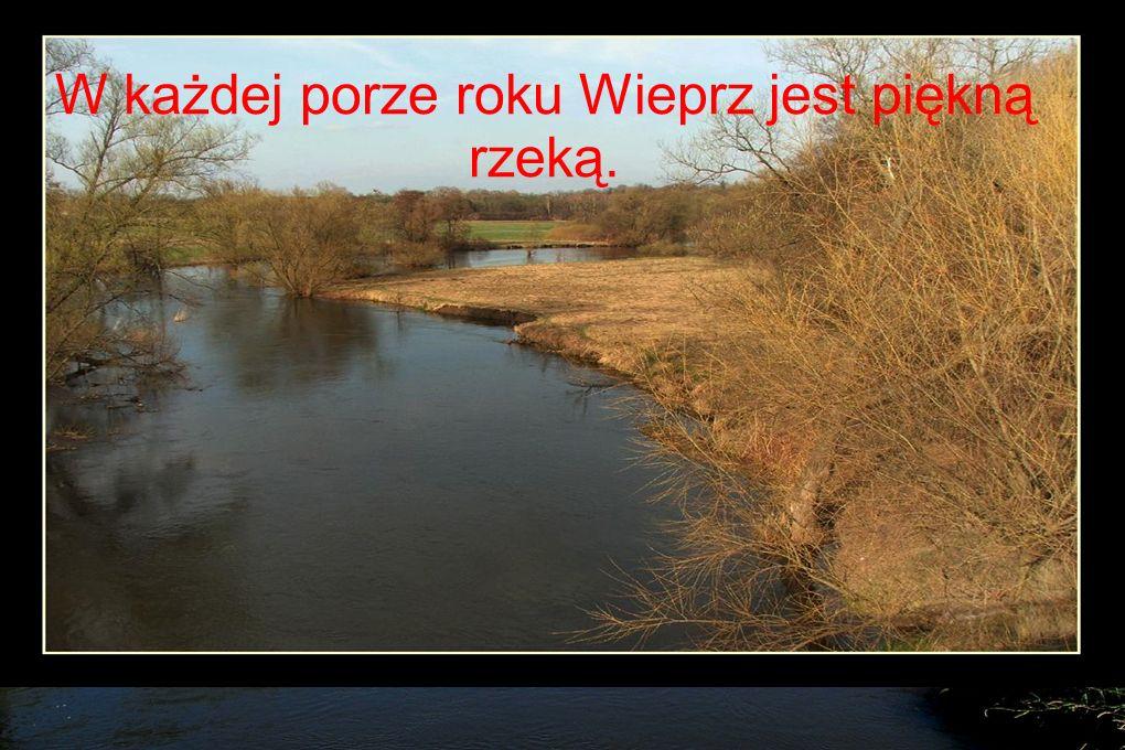 W każdej porze roku Wieprz jest piękną rzeką.