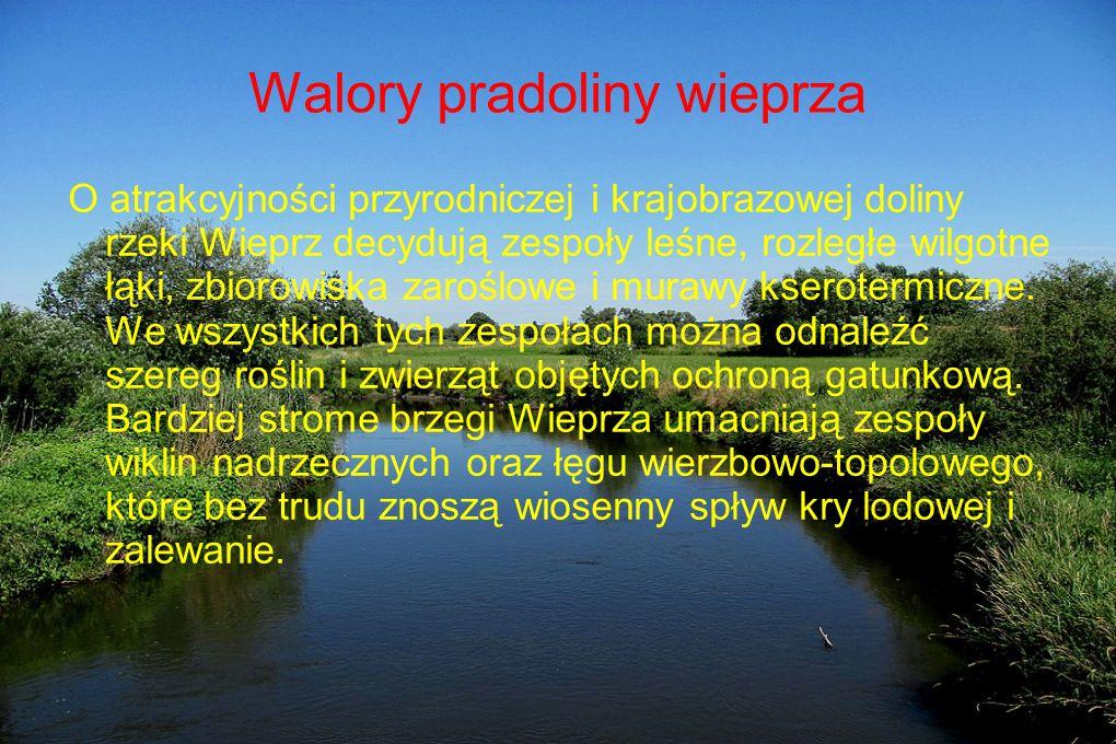 Walory pradoliny wieprza O atrakcyjności przyrodniczej i krajobrazowej doliny rzeki Wieprz decydują zespoły leśne, rozległe wilgotne łąki, zbiorowiska zaroślowe i murawy kserotermiczne.