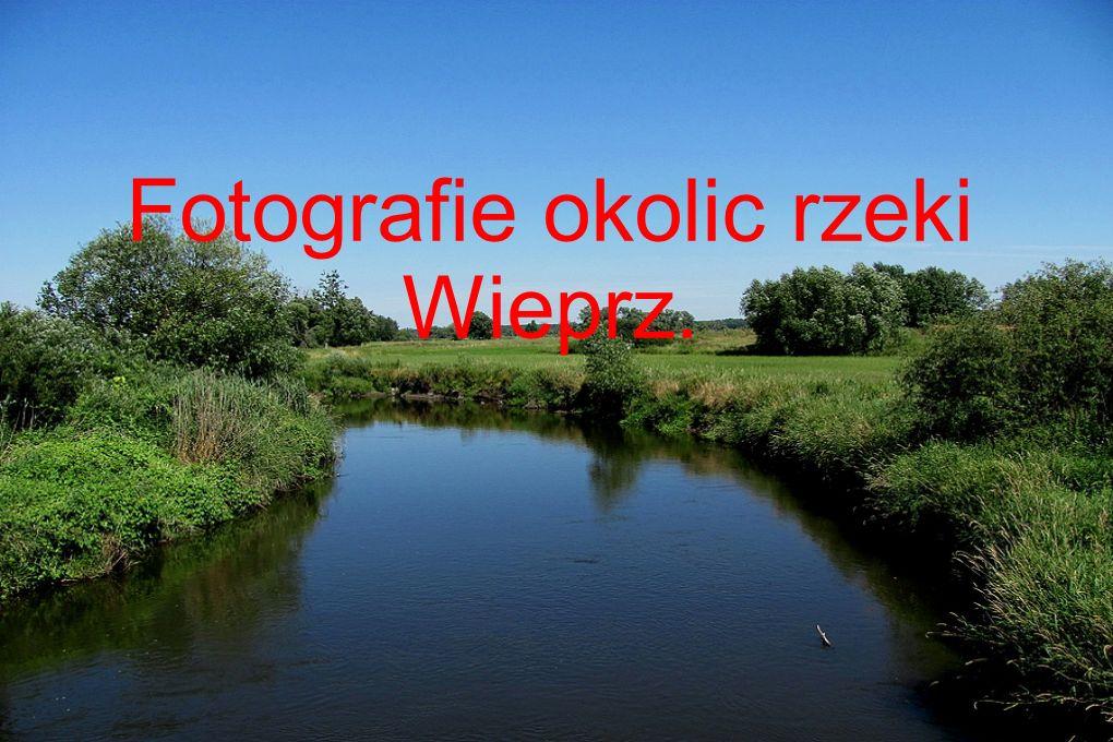 Fotografie okolic rzeki Wieprz.