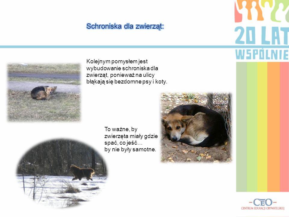 Kolejnym pomysłem jest wybudowanie schroniska dla zwierząt, ponieważ na ulicy błąkają się bezdomne psy i koty. To ważne, by zwierzęta miały gdzie spać