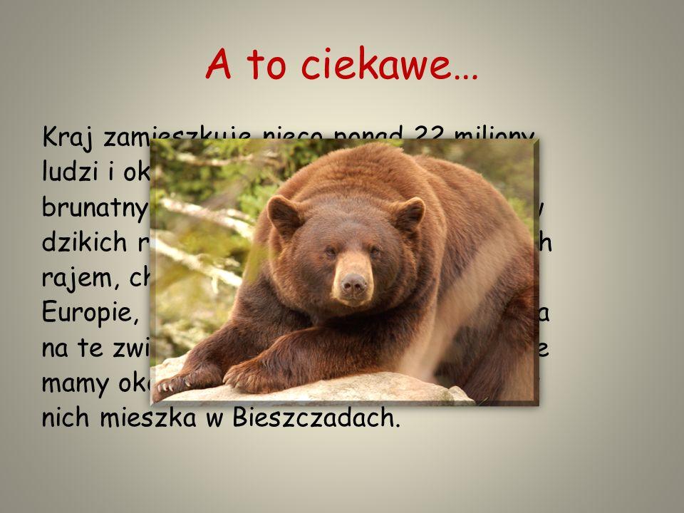 A to ciekawe… Kraj zamieszkuje nieco ponad 22 miliony ludzi i około 6,5 tysiąca niedźwiedzi brunatnych.