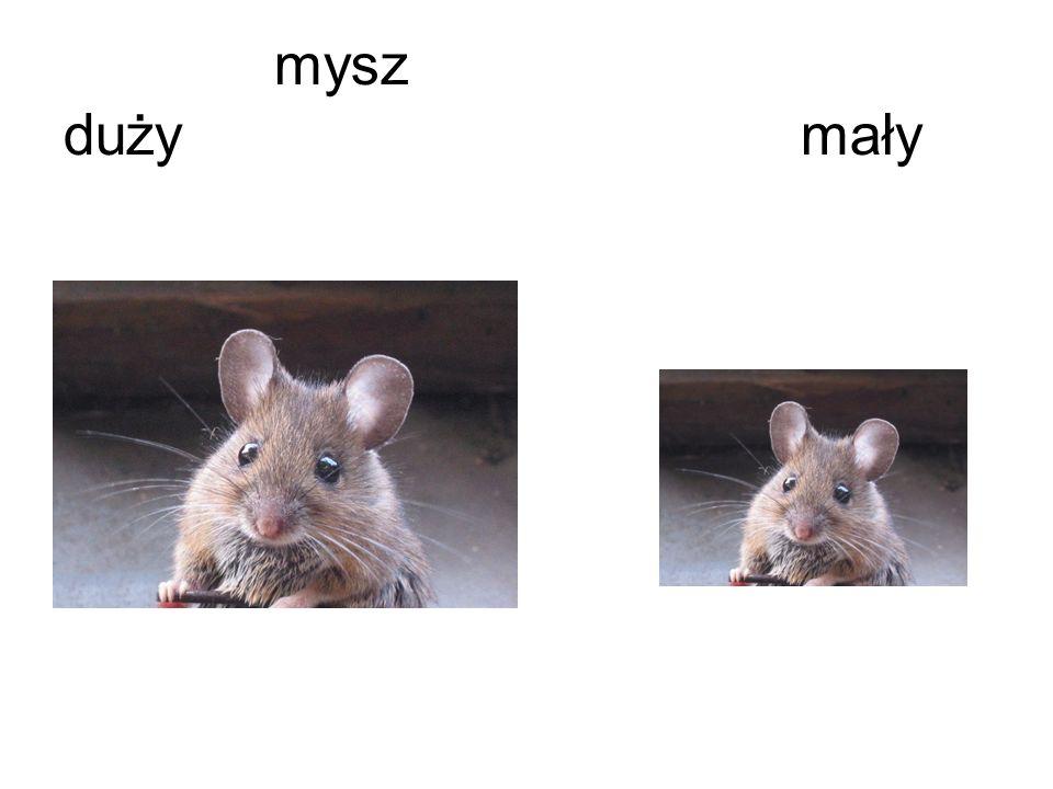 mysz dużymały