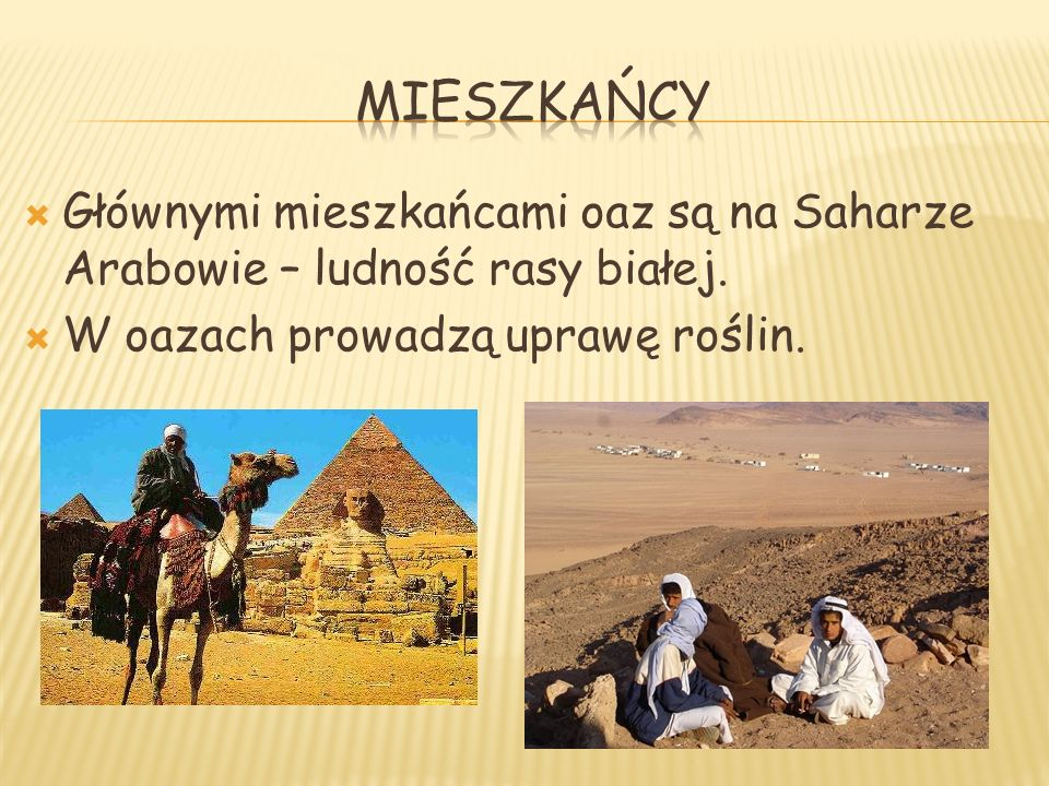 Głównymi mieszkańcami oaz są na Saharze Arabowie – ludność rasy białej. W oazach prowadzą uprawę roślin.