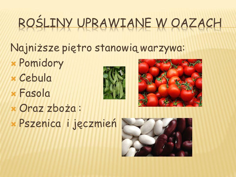 Najniższe piętro stanowią warzywa: Pomidory Cebula Fasola Oraz zboża : Pszenica i jęczmień