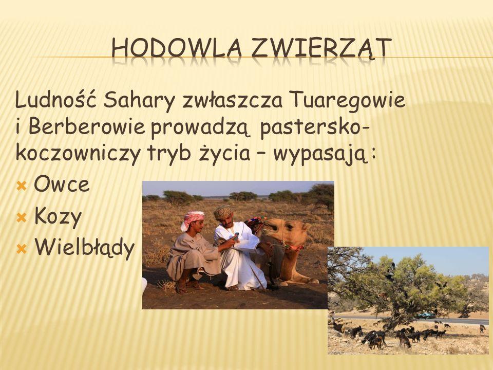 Ludność Sahary zwłaszcza Tuaregowie i Berberowie prowadzą pastersko- koczowniczy tryb życia – wypasają : Owce Kozy Wielbłądy