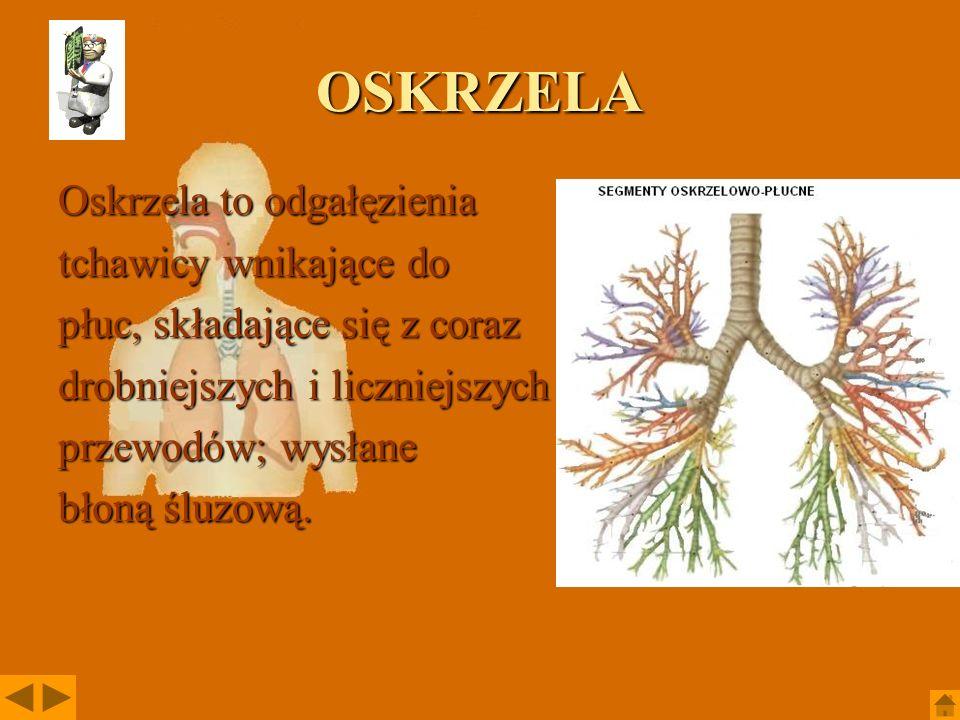 GARDŁO Gardło u kręgowców jest to odcinek przewodu pokarmowego łączący jamę ustną z przełykiem.